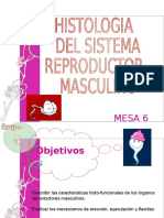Histo Reproductormasculino 110529172830 Phpapp02