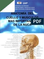 2 y 3 Osteologia_2c Tricangulos Cervicales y Musculos