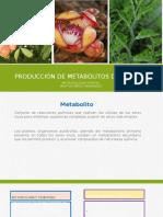 Metabolitos secundarios Maritsa Pérez Hernández.pptx
