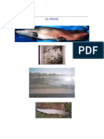 EL PAICHE.pdf