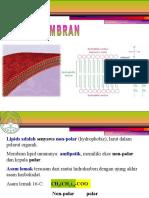 Lipid Dan Membran