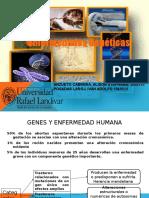 genetica presentacion