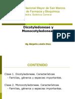 DICOTILEDONEAS