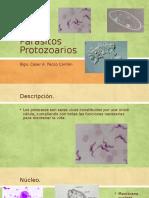 Parásitos protozoarios