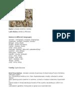 Amalaki - Emblica officinalis monograph