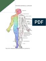 Dermatome Anatomical Landmark