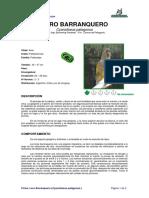 Ficha LORO BARRANQUERO _Cyanoliseus patagonus_.pdf