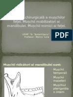 Anatomia Chirurgicală a Mușchilor Feței