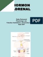 Adrenal Korteks
