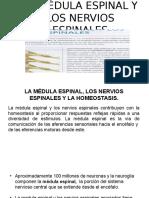 Medula Espinal Tortora