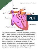 The Circulatory System.pdf