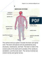 The Nervous System.pdf