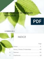 Presentacion Clasificacin Arboles Tropicales