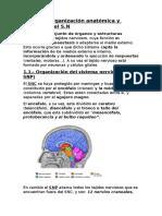 Tema 1 Psicobiologia