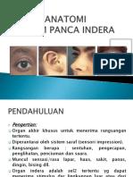 KKPMT_3_Panca_1sd5