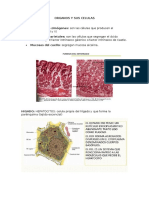 Organos y Sus Celulas