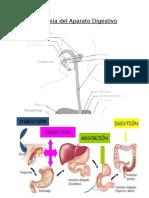 Anatomia Del Aparato Digestivo