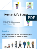Human Life Stages_J