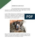Hundimiento Del Globo Ocular- veterinaria