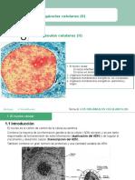 Tema_8 Los Orgánulos Celulares (II)