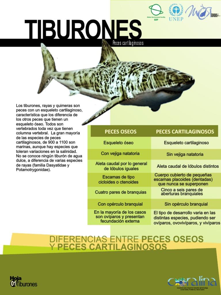 Folletos Tiburon