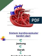 Anfis kardiovaskuler