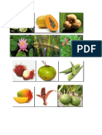 Plant Dispersal