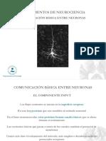 08.- Comunicación Básica Entre Neuronas