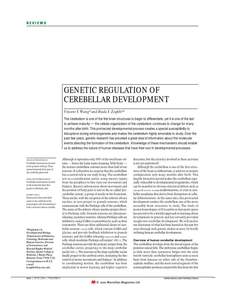 Gnentic Regulation Of Cerebellar Development