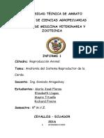 Informe Reproducción en la Cerda