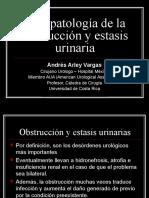 2 Fisiopatologc3ada de La Obstruccic3b3n y Estasis Urinaria