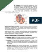 Descripción célula eucariota