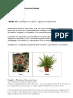 TERCER  AÑO LAS PLANTAS.docx