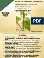 Tallos, BOTANICA GENERAL
