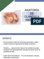 Anatomia de Glandula Mamaria
