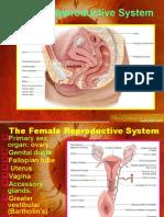femalereproductivesystem-131005022604-phpapp01
