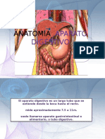 Anatomia Aparato Digestivo
