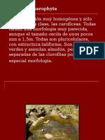 División Charophyta 2006