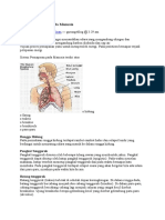 Sistem Pernafasan Pada
