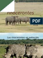losrinocerontesenextincin-130805073611-phpapp01