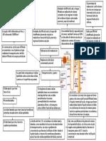 Ultrafiltrado y Reabsorción proximal