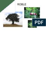 Arboles, Plantas, Flores