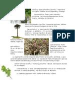 Plantas de Chile