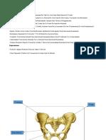 Accidentes Oseos Anatomia