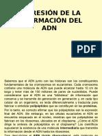 6. Expresión de La Información Del Adn.