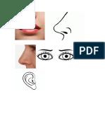 organos de la cara.docx