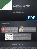 Tuberculosis Bovina