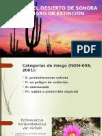 Plantas del Desierto de Sonora en Peligro de Extinción
