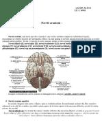 Nervii Cranieni Referat Anatomie