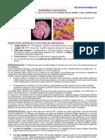 Haemophilus Influenzae